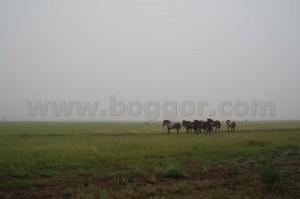 Хакасия, Курган Барсучий Лог, лошади